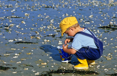 Activités Royan Peche aux crabes
