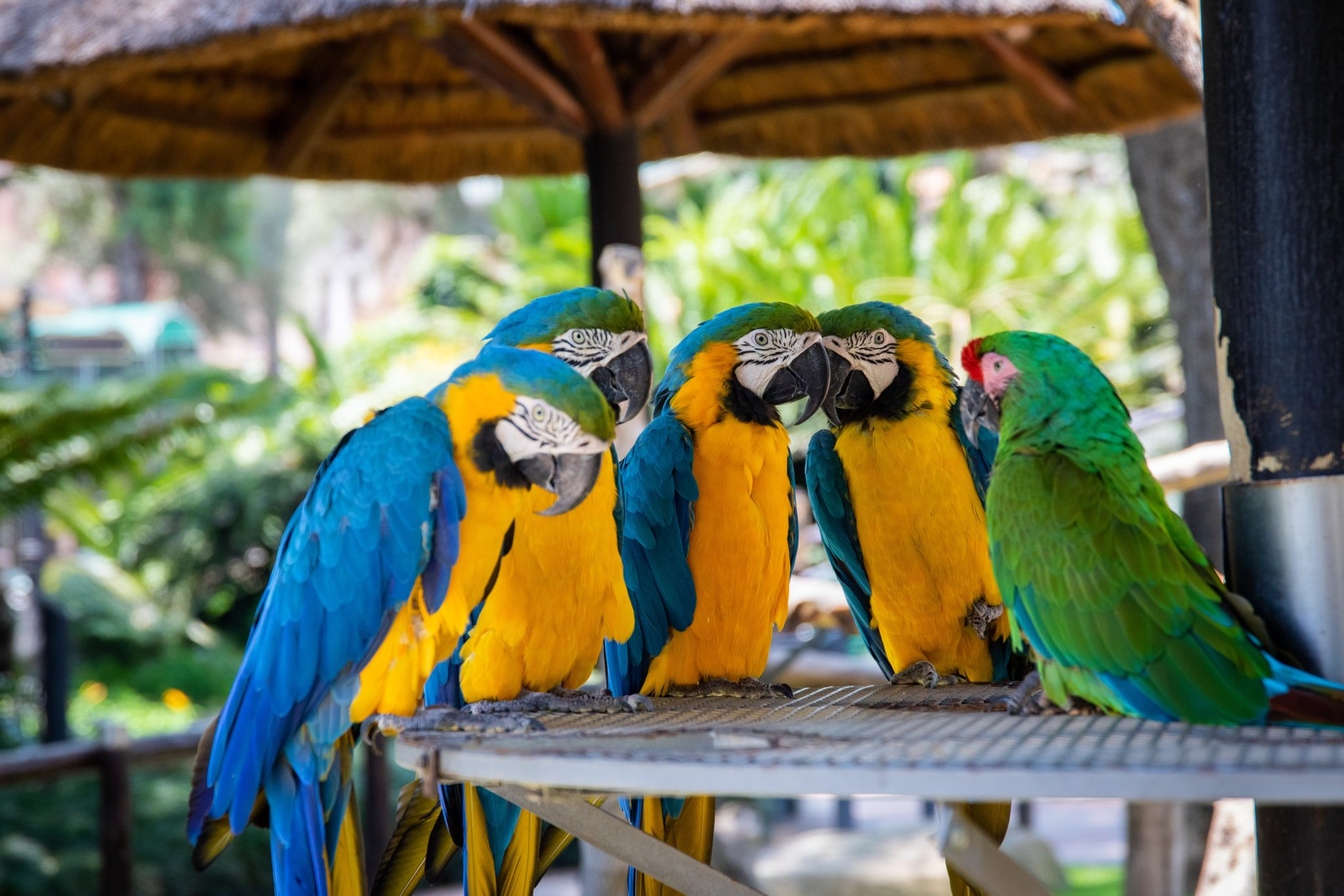 Zoo de la palmyre avec perroquets